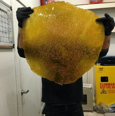 High Quality Dabs-Top Shelf Shatter-Repined By: 5280mosli.com -Organic Cannabis College-