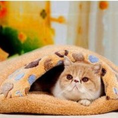 Cute Dog House Pet Bed Sofa Cat Kennel Indoor Puppy Mat Cave Pet Supplies New New Arrived #20181226 Dog Doors, Houses & Furniture