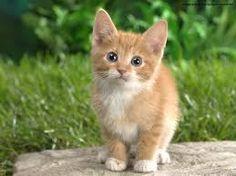 Resultado de imagem para gatinhos filhotes