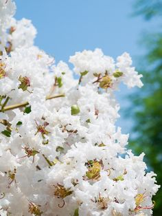 garden shrubs and small trees Plants Under Trees, Small Trees, White Roses, White Flowers, Beautiful Flowers, Front Yard Landscaping, Landscaping Ideas, White Flowering Shrubs, Magnolia Stellata