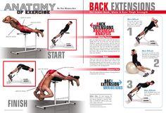 anatomy of exercise  | Anatomy of Exercise - Magazine design, Exercise For Men (Chelo ...