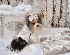 Yvette Ruta carrier ,angel harness, and matching faux fur embroidered   blanket..modeled by Paisley!!