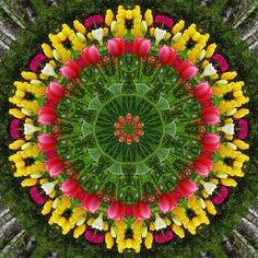 A burst of spring - tulips Art Print