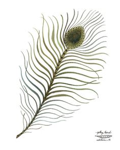 peacock plume feather art watercolor reproduction by GollyBard, $36.00