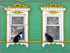 Dos gatos en las ventanas ...