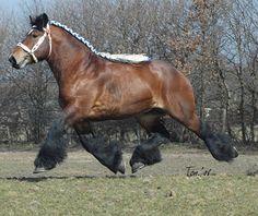 Over trekpaarden | Ron Le Poole - Werkpaarden | graslandbeheer, huifkartochten, bosbouw