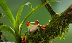 .I like froggy!