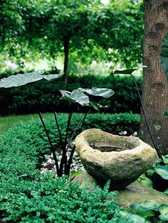 Be Creative     An old stone became a charming birdbath in the Foster's shady garden room. Almost a hidden garden, it features a few dramatic elements such as this bold purple-leaf elephant's ear.  Test Garden Tip: Shady areas of your yard don't have to be barren. Select shade-loving plants to fill it with color and texture