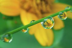 Solid-Faced Canvas Print Wall Art Print entitled Macro shot of rain drops on a tiny grass with flower reflection in them. Thank You Flowers, Wall Art Prints, Canvas Prints, Macro Shots, Drip Painting, Water Droplets, Art Sites, Water Flowers, Pretty Wallpapers