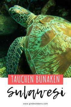 Bastianos Dive Resort Bunaken Tauchen im Norden von Sulawesi Ubud Hotels, Tromso, Bangka, Dive Resort, Koh Tao, Jimbaran Bali, Snorkeling, Southeast Asia, Places To See