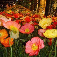 Poppy flowers make me happy!