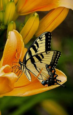 Butterfly photos, 30 the most beautiful butterflies