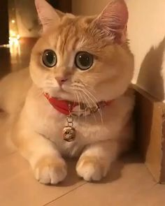 Omg those eyes funny cat quotes, pictures, videos - Katzen Bilder - Cute Cats And Kittens, Baby Cats, I Love Cats, Kittens Cutest, Kitty Cats, Pet Cats, Funny Kittens, Kittens Meowing, Baby Kitty
