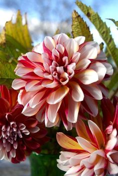 Beautiful flowers/ Encyclopedia of Plants/ Forum of gardeners
