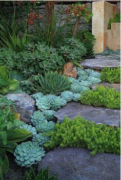 OH MY GOD!  I love succulents!  Perfect for rock stairs and walls in back yard!  GET ON THIS!  (Better Home Gardens: Do It Yourself: An Attractive Rock Garden Anyone Would Be Proud Of)