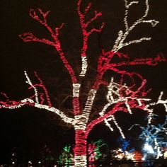 Red and white candy cane outdoor christmas lights display tree candy cane lighted tree at the zoo lights aloadofball Image collections