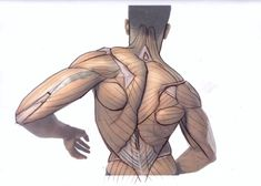 Exceptional Drawing The Human Figure Ideas. Staggering Drawing The Human Figure Ideas. Anatomy Back, Body Anatomy, Anatomy Study, Anatomy Reference, Human Anatomy Drawing, Body Drawing, Life Drawing, Anatomy Sketches, Body Sketches