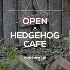 of the week: line your feeding station with newspaper and dry leaves and lay shallow dishes of hedgehog-friendly food and water inside the box! Eco Garden, Dream Garden, Small Gardens, Outdoor Gardens, Hedgehog House, Hedgehog Care, Sensory Garden, Urban Nature, Garden Projects