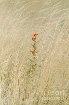 Title  Simple Splash Of Color   Artist  Debra Martz   Medium  Photograph - Photography