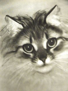 "Antique, bevel-matted print from a book illustrated with beautiful cat drawings ""PANDORA,"" by Clare Turlay Newberry, published in 1944."
