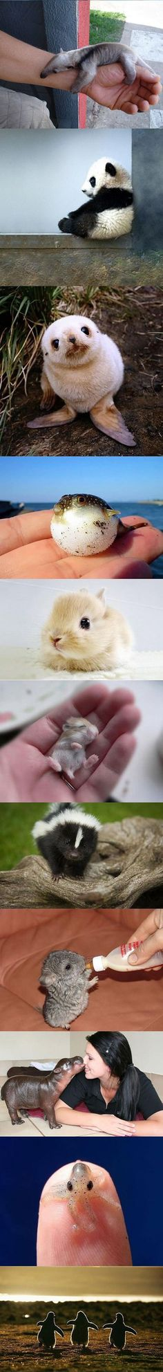 Looking at these photos of baby animals really make me wish they stay in their baby form. Awww! I just can't stop smiling