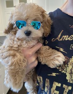 Maltipoo Doggies, Dogs And Puppies, Puppy Palace, Maltipoo, Valentino, Adoption, Hollywood, Beauty, Foster Care Adoption