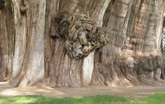 Bizar tree 14
