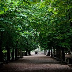 Where in the world is @nytimestravel? The photographer @SW_PHOTO took a stroll through this canopy of trees on the first day of May. Let us know where you think this picture was taken. Follow @nytimestravel to see one more photo of this weeks mystery destination. # # by nytimes