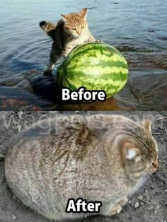 Funny Cat Memes 498421883761690718 - 35 Funny Cat Pictures That Are Just Hilarious Source by Cute Animal Memes, Funny Animal Quotes, Animal Jokes, Funny Animal Pictures, Cute Funny Animals, Funniest Animals, Cat Quotes, Funny Cat Memes, Funny Dogs