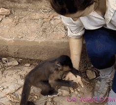 Cute Monkey Making Girl Break A Nut