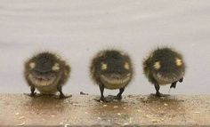 Smiley duck butts!