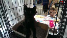 Jax... adopted!