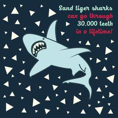 I'd hate to be the Tooth Fairy in charge of Tiger Sharks!