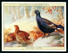 Players, Game Birds & Wild Fowl 1928. No1 Black Game.