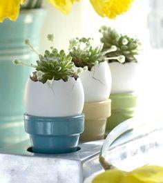Suculentas... Nos encantan!  http://milejardin.com/ #floristeria #florist #Alcañiz | Succulents easter ....