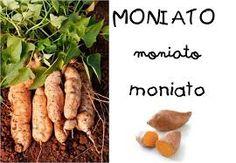 fruits de la tardor - Catalan Language, Fruits And Vegetables, Album, Food, Tubs, Pj, Printables, Halloween, School