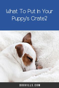 "Are you wondering ""does my dog need a bed in his crate?    ""You might if you've just started crate training your dog and don't know what to put in your puppy's crate.    Fortunately, I've got all the answers you need on how to make your dog's crate more comfortable. Best Puppies, Best Dogs, Dogs And Puppies, Crate Training, Training Your Dog, Cute Dog Collars, Fluffy Bedding, Emergency Vet, Puppy Food"