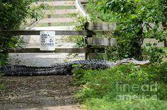 Here's Your Sign by Debra Martz www.debramartz.com