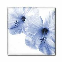 """2 large Blue Hibiscus In Closeup - 12 Inch Ceramic Tile by Florene. $22.99. Construction grade. Floor installation not recommended.. Clean with mild detergent. Dimensions: 12"""" H x 12"""" W x 1/4"""" D. High gloss finish. Image applied to the top surface. 2 large Blue Hibiscus In Closeup Tile is great for a backsplash, countertop or as an accent. This commercial quality construction grade tile has a high gloss finish. The image is applied to the top surface and can be cleaned..."""