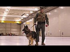 Rebecca Becomes A Chew Toy For Military Dogs – What Happend? (Video)http://www.fluffy1.com/rebecca-becomes-chew-toy-military-dogs/