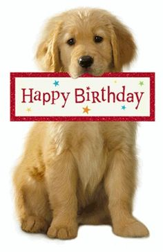 For Someone Nice Birthday Printable Cards Happy Birthday Puppy, Birthday Wishes For Men, Funny Happy Birthday Meme, Happy Birthday Girls, Happy Birthday Pictures, Happy Birthday Messages, Happy Birthday Quotes, Happy Birthday Greetings, Birthday Fun