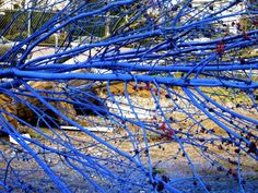 blue branch - Google Search