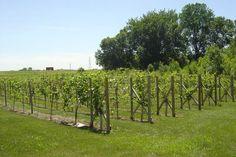 Buffalo Rock Winery Home Page