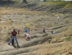 Mineral Wells Fossil Park-take your kids fossil hunting on a nice day. Free. Keep what you find. Carefully read what you need to do to plan your visit!