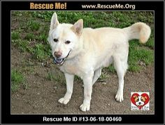 Chowsky (male)Chow Chow Mix     Age: Adult    All dogs are spayed/neutered before you bring them home. $80 to the vet for a rabies vaccine and spay/neuter. $50 at the pound for a dhlpp vaccine, 1 dose of wormer and a license. TOTAL: $130. Adoption Fee: $130 Animal Location:Friends of Fido (Mahoning County Dog Pound)Mahoning County Youngstown, OH  MAP IT!Contact:Tish - cell phone = 7243720475  EMAIL