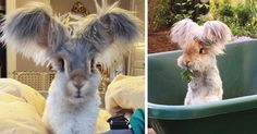 Meet Wally, The Bunny With The Biggest Wing-Like Ears   Bored Panda