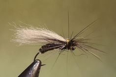 Potemkin C, Matti Huitila's Mature February Red stonefly imitation. Dazzling dry fly fishing between snow covered banks.