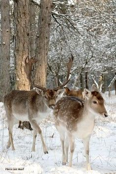 winter.quenalbertini: Winter beauty | My misty morning