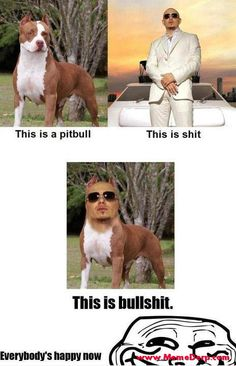 Derp Derpina Internet Meme's Collection: A Pitbull To Make Everyone Happy