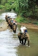 olifanten aan het werk -